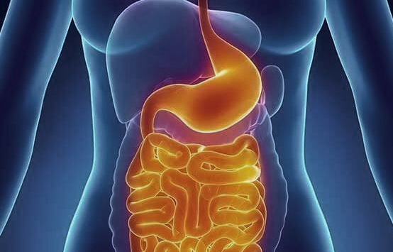 Dr. Fred Ragsdale - Digestive Issues